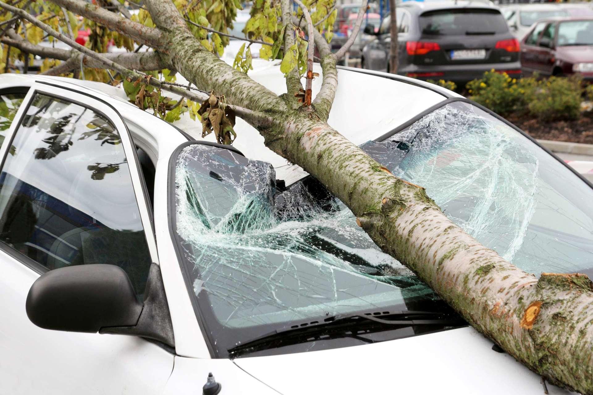 Kako naplatiti štetu kada na automobil padne grana?